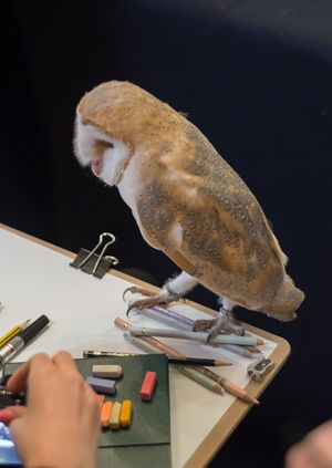 Wild Life Drawing: Owls