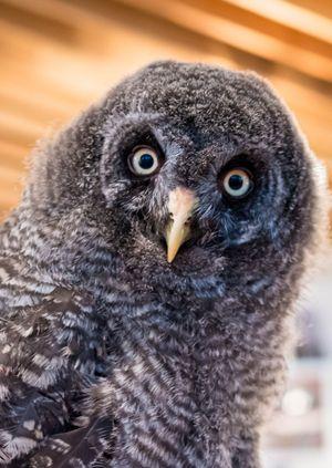 Wild Life Drawing: Unusual Owls