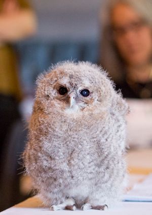 Wild Life Drawing Online: Baby Owls